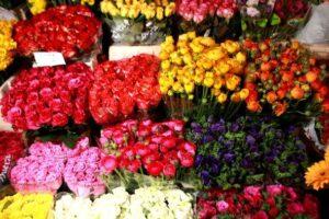 Gazdag virágválaszték
