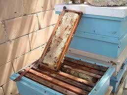 Méhpempő kiszállítás országosan