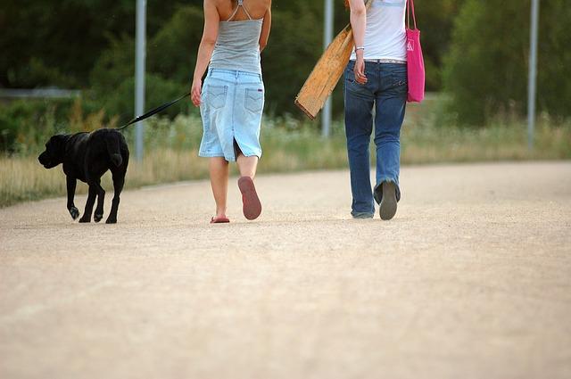 Balatoni szállás kutyával, tökéletes programok gazdiknak